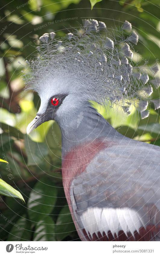 Crowned Pigeon Virgin forest Animal Wild animal Bird Zoo 1 Yellow Orange Colour photo Day