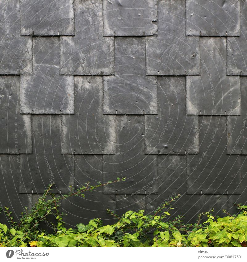 Flap technology | Architecture and nature bush shrub Wall (building) Hedge green Warmth ardor Anthracite Black shingles Slate slate overlap