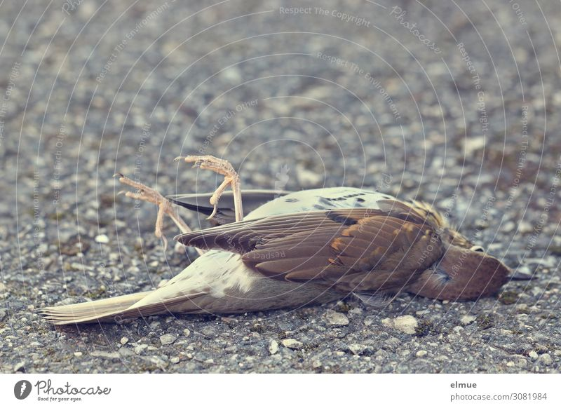 flown out Wild animal Dead animal Bird Throstle Feather Wing Claw Lie Small Love of animals Grief Death Fear of the future End Threat Nature Sadness