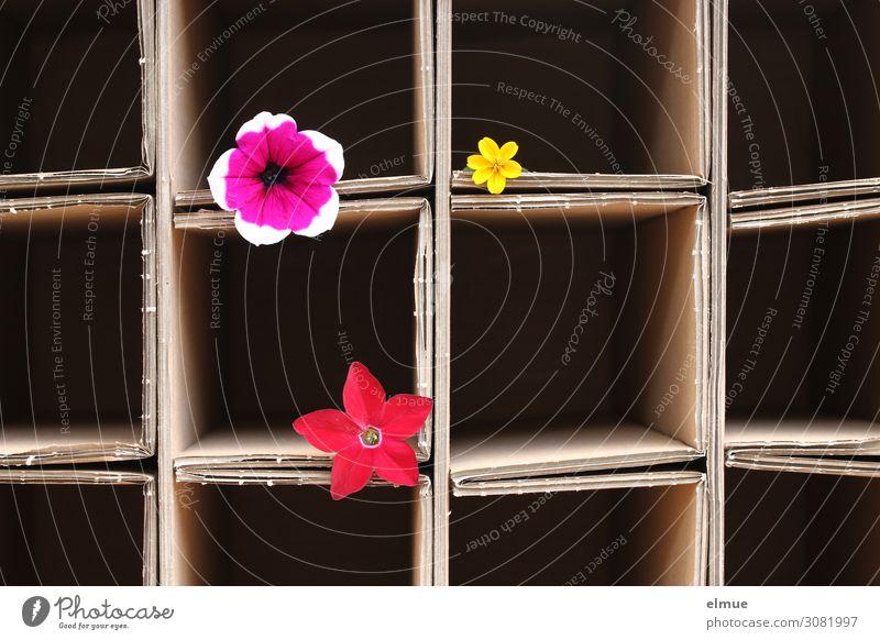 tidied Decoration Square Line Blossoming Lie Simple Multicoloured Joy Romance Orderliness Esthetic Design Colour Creativity Sustainability Network