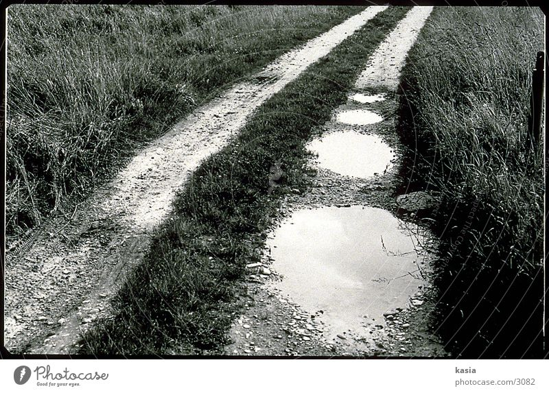 puddle of water_02 Puddle Grass Earth Lanes & trails