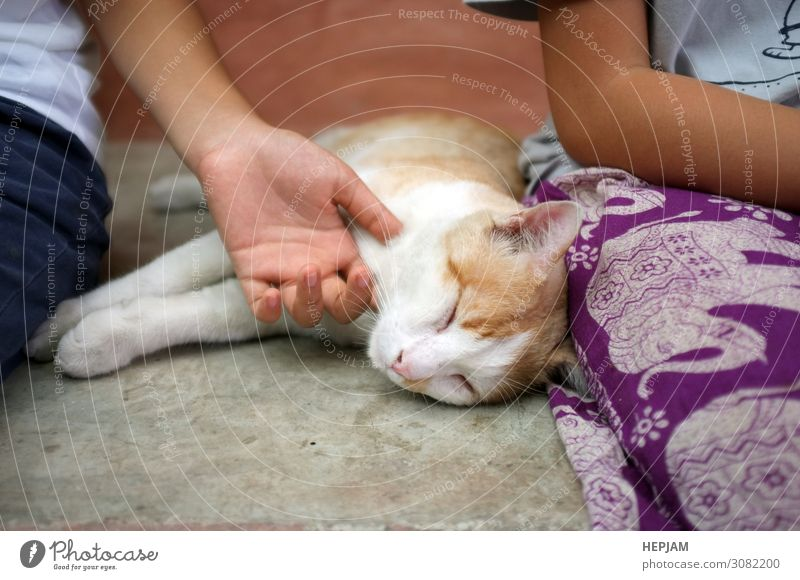 Happy kitten likes being stroked by girl's hand. Cat Woman Human being Hand Relaxation Animal Joy Face Adults Yellow Love Natural Small Playing Gray