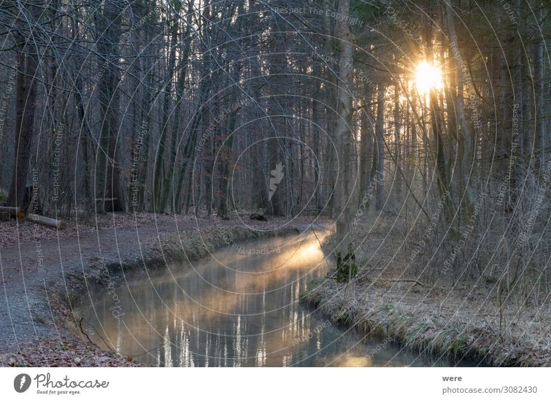 sunrise over a forest road at a stream Nature Water Brook Freeze Cold Expectation branches copy space creek dirt road forest path landscape morning light nobody