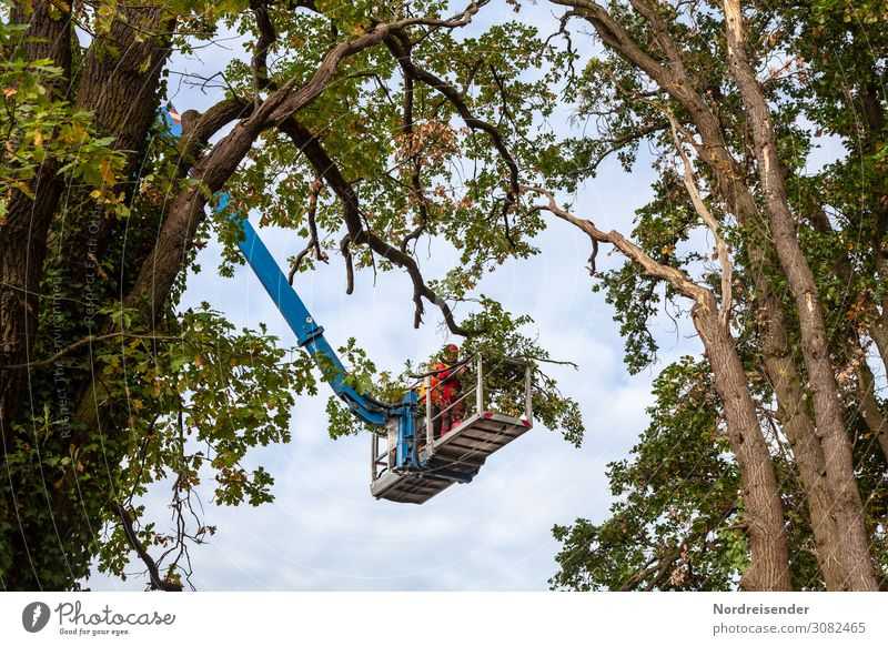Tree care Work and employment Profession Workplace Economy Agriculture Forestry Logistics Services Tool Machinery Technology Human being Nature Summer Autumn