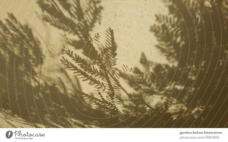 shadow plays Art Nature Plant Movement Relaxation Sustainability Brown Gray Enthusiasm Contentment Black & white photo Subdued colour Detail Deserted