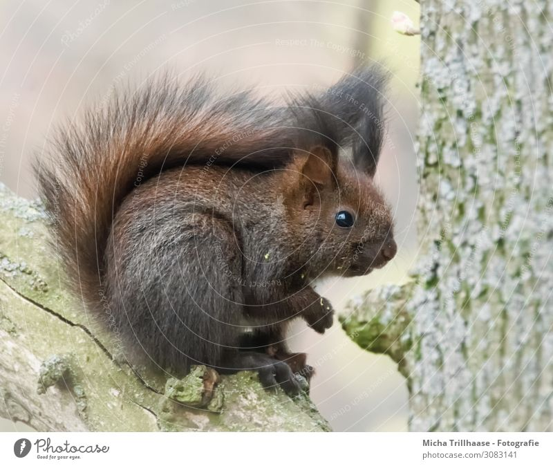 Young squirrel discovers the world Nature Animal Sunlight Beautiful weather Tree Forest Wild animal Animal face Pelt Claw Paw Squirrel Head Eyes Nose Ear Tails