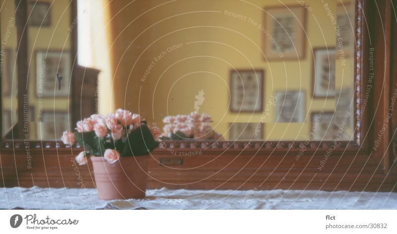 The mirror Flowerpot Mirror Tuscany Rose Ancient Ambient Living or residing Image face Perspective