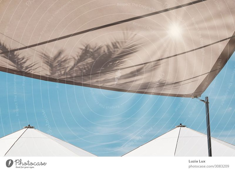 Parasol, under palm trees Sun Summer Beautiful weather Warmth Deserted Town Sunshade Trendy bar Vacation mood Bright Blue Sky Beige White Subdued colour
