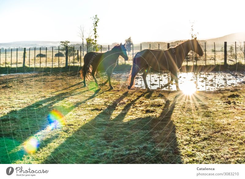 Early in the morning Nature Landscape Air Water Sky Horizon Autumn Beautiful weather Plant Tree Grass Meadow Pasture Horse 2 Animal Fence Pasture fence Going