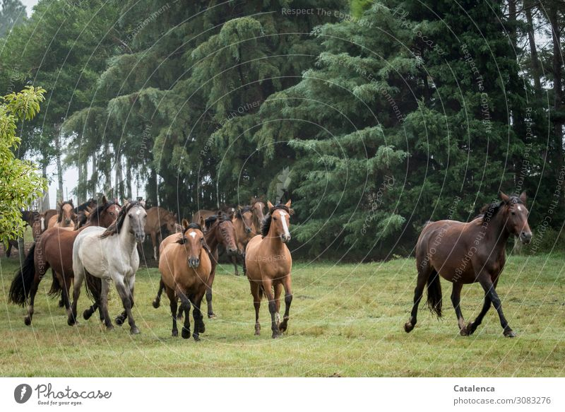 unattached Ride Nature Landscape Plant Animal Summer Bad weather Tree Grass Bushes Park Meadow Horse Herd Movement Walking Together Strong Brown Gray Green