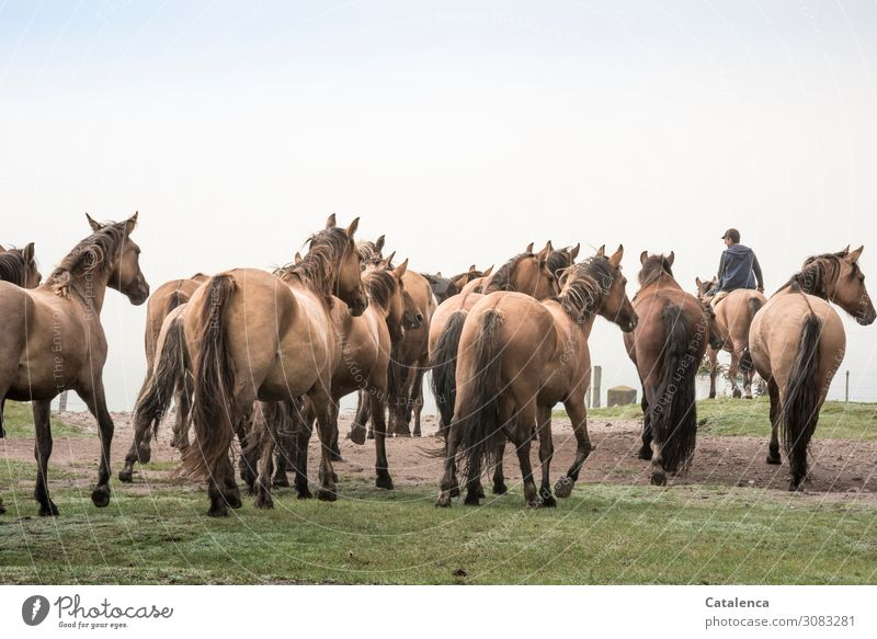 The herd of horses follows the young rider to the pasture Sky Keeping of animals Farm animal Willow tree Agriculture Free-range rearing Plant Grass Nature