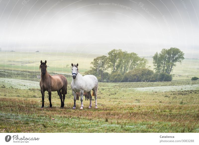 Valuable | Friendship Nature Landscape Plant Animal Sky Summer Bad weather Fog Tree Grass Bushes Meadow Hill Pasture Pampa Steppe Farm animal Horse 2 Observe
