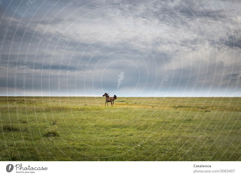 At a distance Nature Landscape Plant Animal Sky Clouds Horizon Summer Bad weather Grass Meadow Pampa Pasture Steppe Farm animal Horse 1 Movement Walking