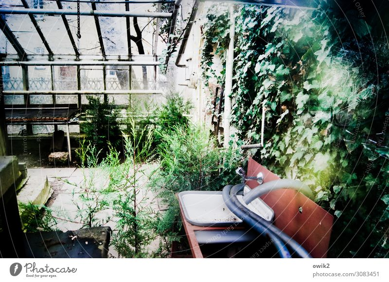 old garden Spring Plant Bushes Ivy Garden Window Greenhouse Market garden Sink Hose Glass Metal Plastic Old Decline Past Transience abandoned Loneliness
