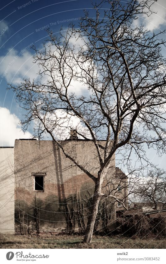 Sky Old Tree House (Residential Structure) Clouds Window Wall (building) Grass Germany Garden Wall (barrier) Facade Bushes Beautiful weather Transience Past