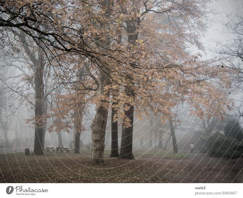 Nature Plant Landscape Tree Calm Autumn Environment Sadness Lanes & trails Grass Park Fog Idyll Bushes Transience Grief