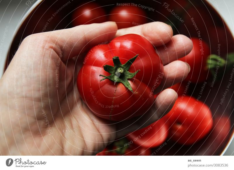 tomato harvest Food Vegetable Tomato Nutrition Eating Buffet Brunch Organic produce Vegetarian diet Diet Italian Food Hand Environment Nature Plant
