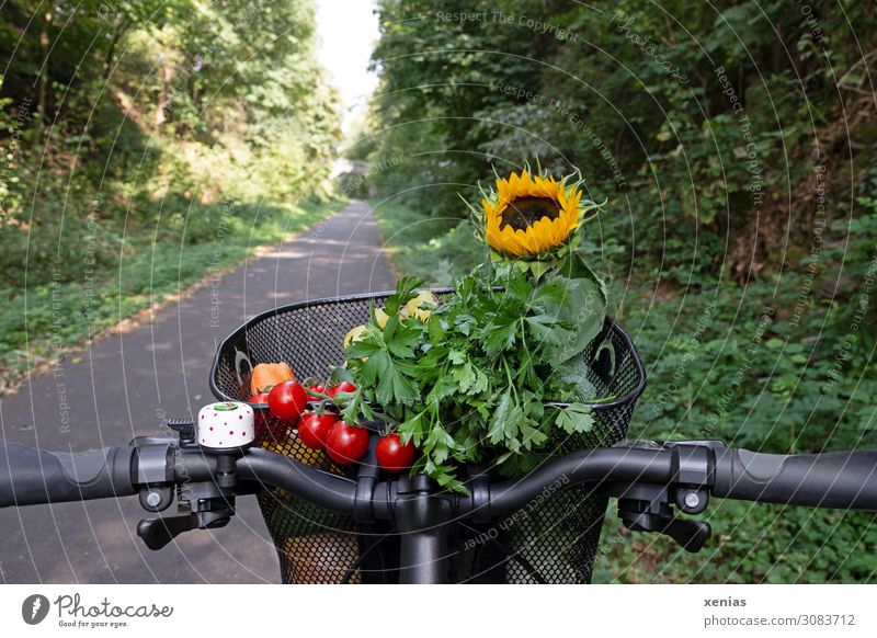 modern transport - red tomatoes, green parsley and yellow sunflower are in a bike basket bicycle basket Vegetable Herbs and spices Bicycle handlebars Tomato