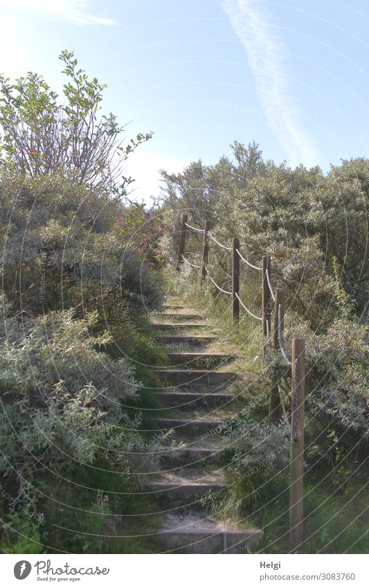 Path with a wooden staircase and railings between bushes in the dunes Environment Nature Landscape Plant Sky Sunlight Summer Beautiful weather Grass Bushes