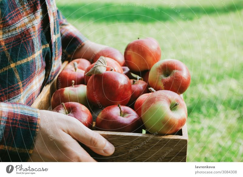 Man in plaid shirt holding wooden box with red apples Healthy Eating Summer Green Red Hand Food Wood Autumn Natural Grass Fresh Agriculture Harvest Apple