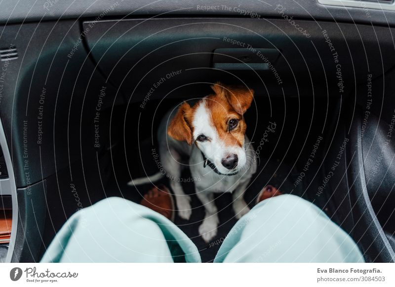 unrecognizable woman traveling by car with her cute small dog Joy Leisure and hobbies Vacation & Travel Tourism Trip Summer Summer vacation Human being Feminine