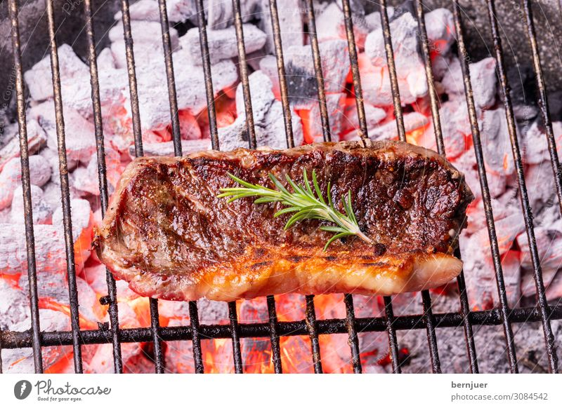 Grilled steak Meat Nature Warmth Barbecue (apparatus) Wood Rust Hot Red Black Authentic Steak beef steak Beef Rosemary Charcoal Fireplace Flame BBQ Coal ash