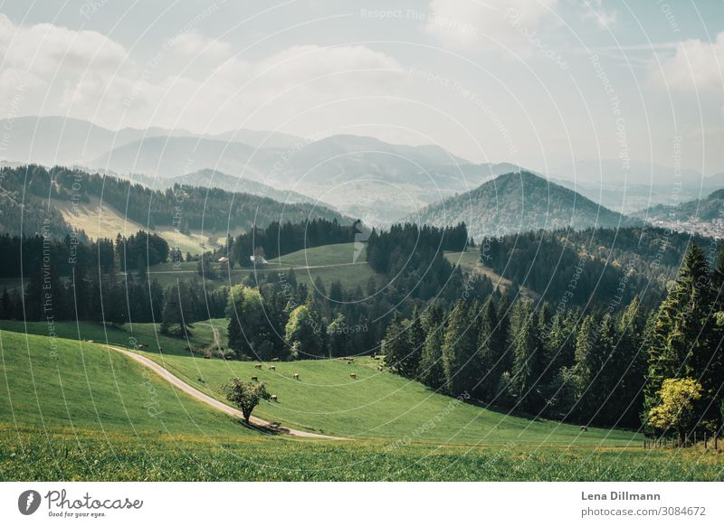 201909 Mountain #6 Environment Nature Landscape Animal Sky Clouds Sunlight Spring Summer Beautiful weather Tree Grass Hill Alps Kalzhofen Germany Deserted Green