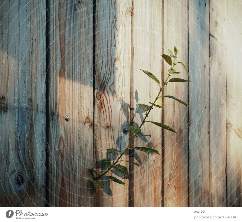 Plant Wood Natural Growth Curiosity Stalk Blade of grass Wooden fence