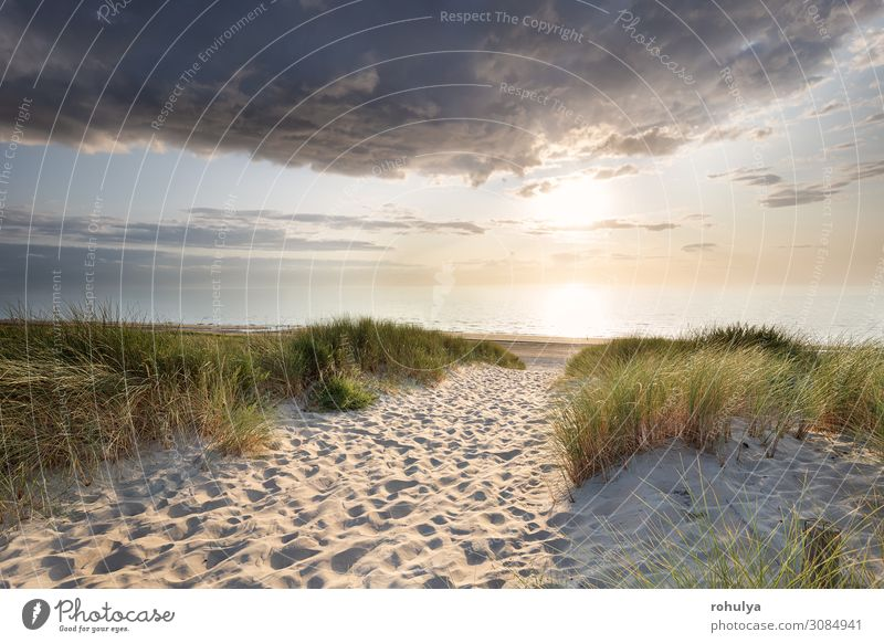 sand path to north sea beach at sunset Vacation & Travel Tourism Summer Sun Beach Ocean Nature Landscape Sand Sky Horizon Coast North Sea Simple people walk