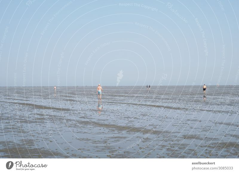 Wadden hiking at low tide in Cuxhaven Lifestyle Relaxation Leisure and hobbies Vacation & Travel Tourism Summer Summer vacation Beach Ocean Hiking Human being