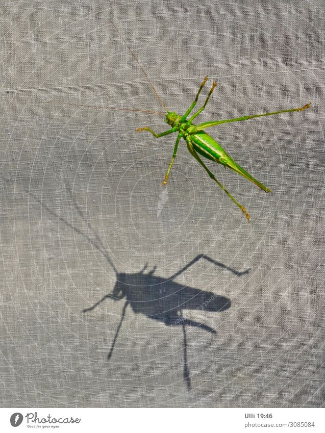 At the window: (No. 99) Sunlight Summer Animal Wild animal Locust Dryland grasshopper 1 Animal tracks Shadow Light and shadow To hold on Hang Esthetic Athletic