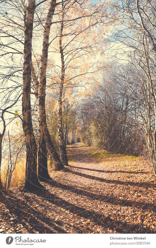 An autumnal path with trees and light and shadow Nature Landscape Earth Sunlight Autumn Tree Forest Footpath Promenade Bright naturally Blue Brown White Moody