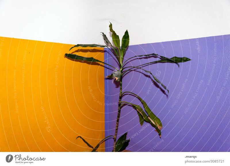 plant Plant Foliage plant Rubber tree Wall (barrier) Wall (building) Trashy Violet Orange White Colour Sustainability Colour photo Interior shot Deserted