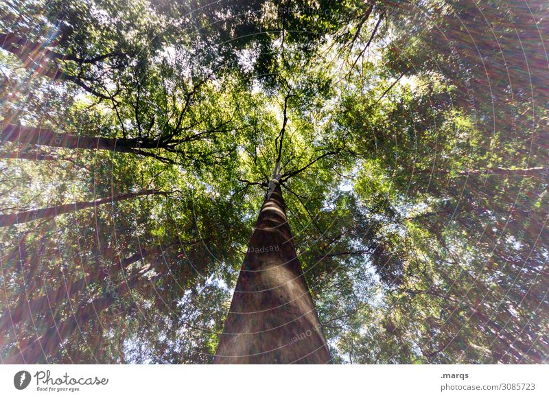 tree Forest Perspective Nature Day Worm's-eye view Sky Growth Tall green Landscape Environment Light Forestry Tree trunk Light (Natural Phenomenon) Sunlight
