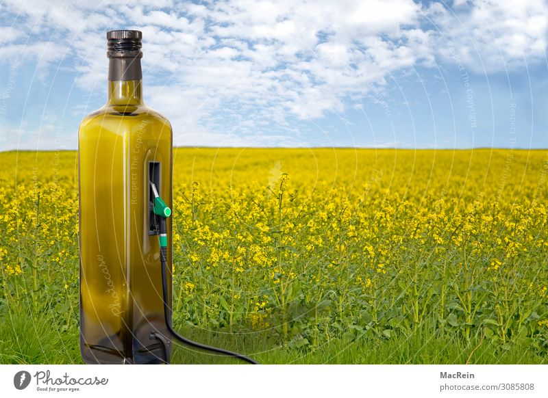 Renewable Energy Grain Bottle Agriculture Forestry Energy industry Renewable energy Nature Plant Field Sustainability Yellow Crisis Environmental protection