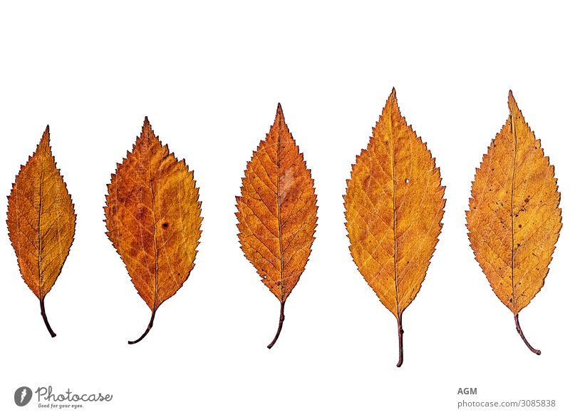 autumn Nature Plant Weather Leaf Old Esthetic Yellow Orange White Moody Calm Senior citizen Decline Transience Background picture Seasons Autumn Dry Colour