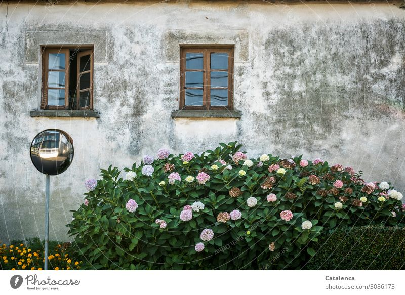 Nature & Architecture   Loosening up through colour and structure of the plants Facade House (Residential Structure) Window built Wall (building) Gloomy