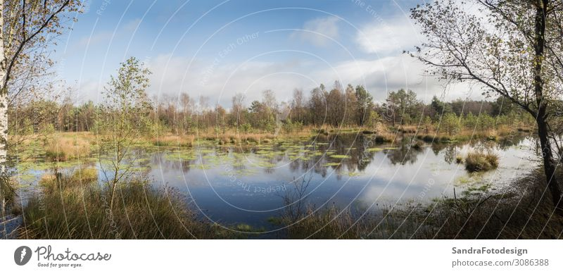 Panorma of a beautiful moor landscape in the lueneburger heath Leisure and hobbies Summer Environment Nature Beautiful weather Bushes Park Forest Bog Marsh
