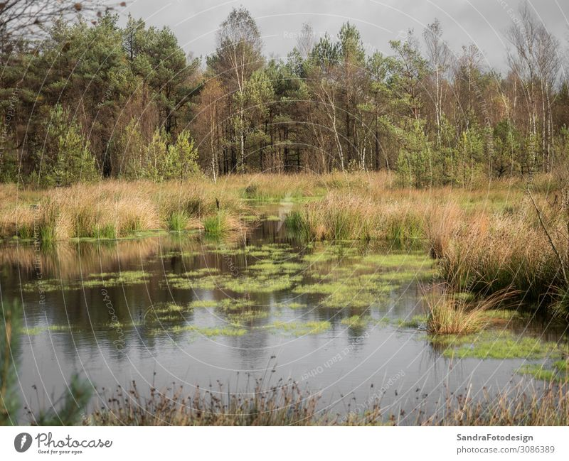 Beautiful moor landscape in the lueneburger heath Leisure and hobbies Hiking Nature Wild plant Park Meadow Forest Bog Marsh Observe Green Environment autumn