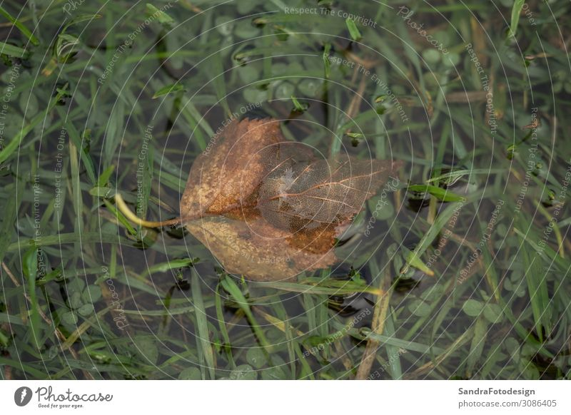Leaf in a water puddle on a green meadow Trip Garden Nature Plant Meadow Soft Green field rural landscape country countryside wet agriculture grass season