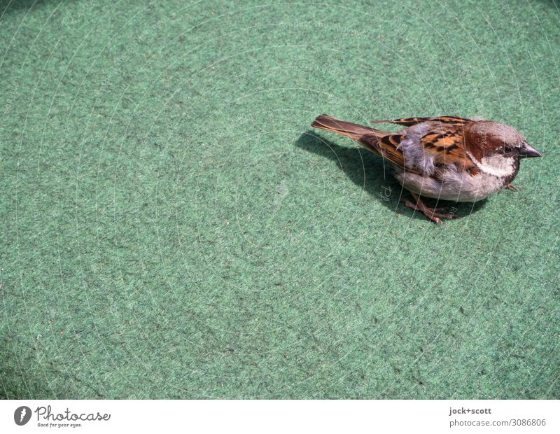 green lifestyle small bird Prenzlauer Berg Wild animal Tit mouse 1 Animal Carpet Plastic Sit Small Near Curiosity Cute Under Warmth Emotions Moody Acceptance