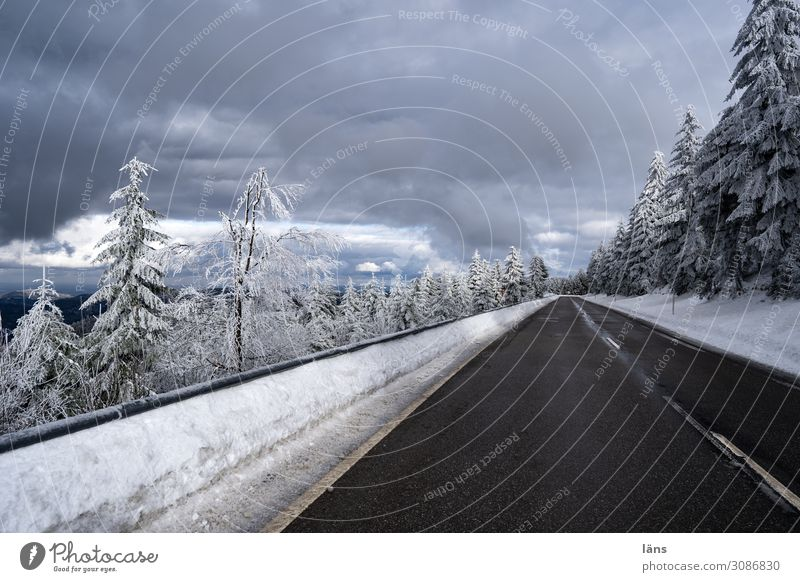 Snow and ice free l on the road again Forest Transport Motoring Street Lanes & trails Beginning Colour photo Exterior shot Deserted Copy Space top