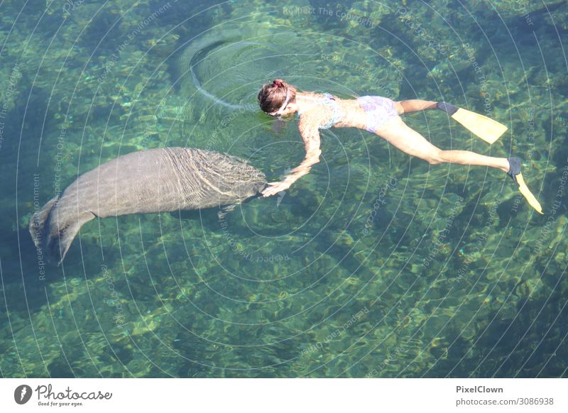 manatee Lifestyle Tourism Adventure Freedom Safari Summer vacation Ocean Swimming & Bathing Dive Human being Young woman Youth (Young adults) Body 1