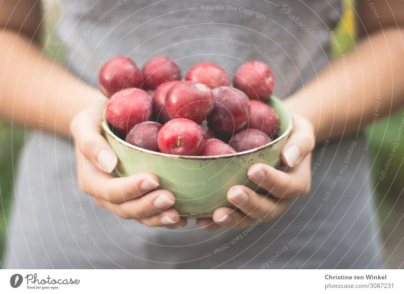 Young woman holding a bowl of red plums in front of her Food fruit Plum Nutrition Bowl Youth (Young adults) sleeves by hand Fingers 1 Human being 18 - 30 years