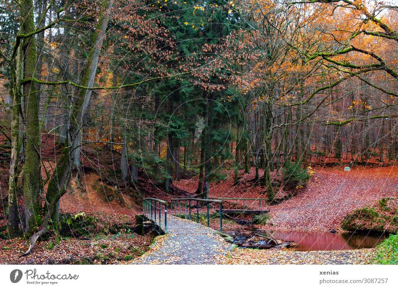 Nature Green Landscape Red Tree Leaf Forest Autumn Yellow Lanes & trails Fresh Bridge Transience Climate Seasons Brook
