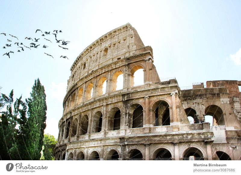 Close up view of Rome Colosseum in Rome , Italy Vacation & Travel Stadium Theatre Culture Sky Ruin Building Architecture Monument Stone Old Historic Ancient