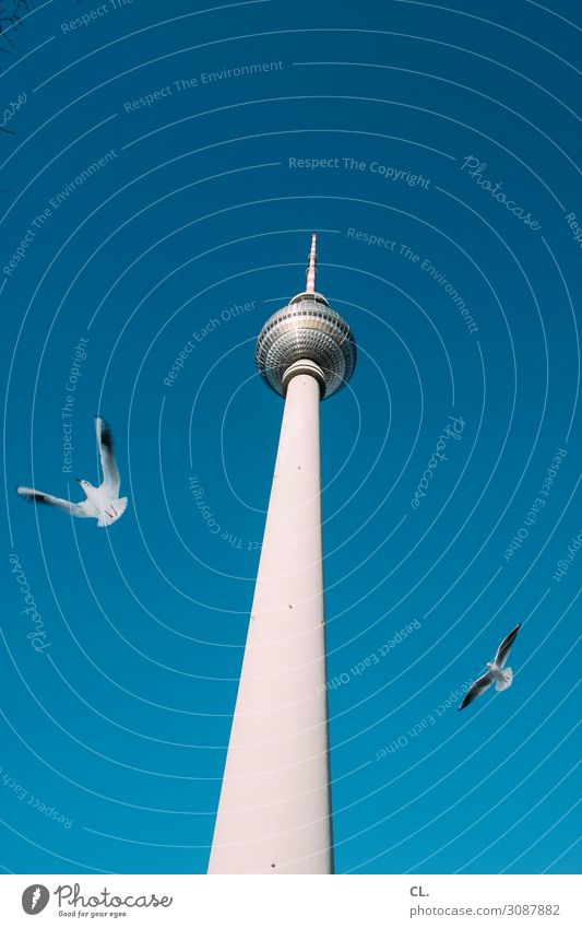 two seagulls Vacation & Travel Tourism Sightseeing City trip Summer vacation Sky Cloudless sky Beautiful weather Berlin Germany Capital city Downtown Deserted