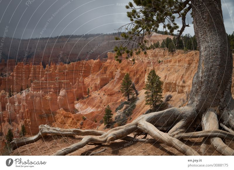 Vacation & Travel Nature Plant Landscape Tree Far-off places Life Rock Trip Horizon Growth USA Climate Tree trunk Americas Desert