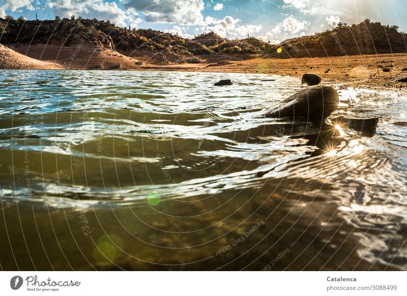 bathing weather Sun Beach Waves Hiking Landscape Animal Sand Water Sky Clouds Sunlight Plant Bushes Cactus Wild plant Hill Lakeside Movement Fluid Fresh