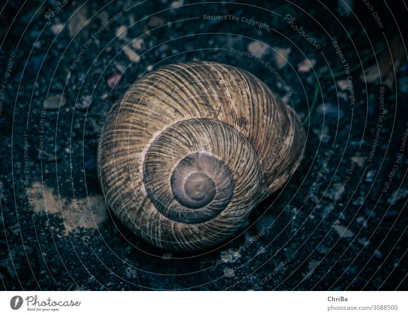 snail shell Environment Nature Animal Earth Autumn Garden Rock House (Residential Structure) Snail 1 Stone Sadness Living or residing Natural Slimy Beautiful